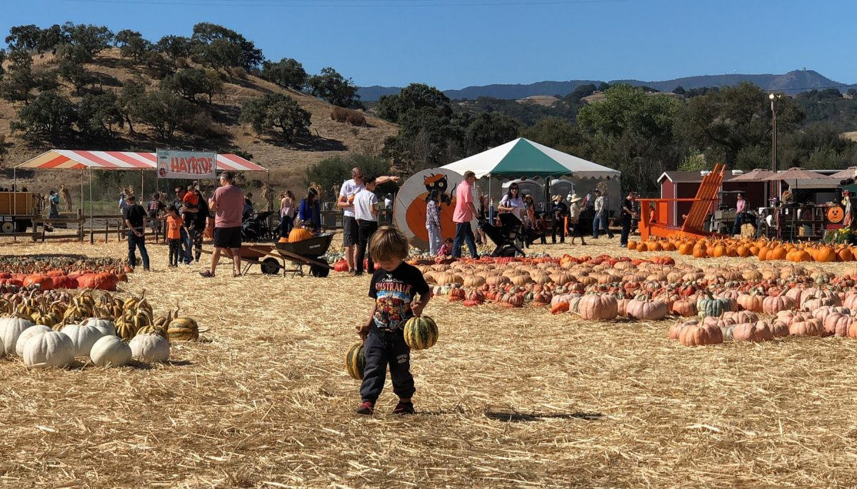 The Great Pumpkin: Silicon Valley's Best Pumpkin Patch