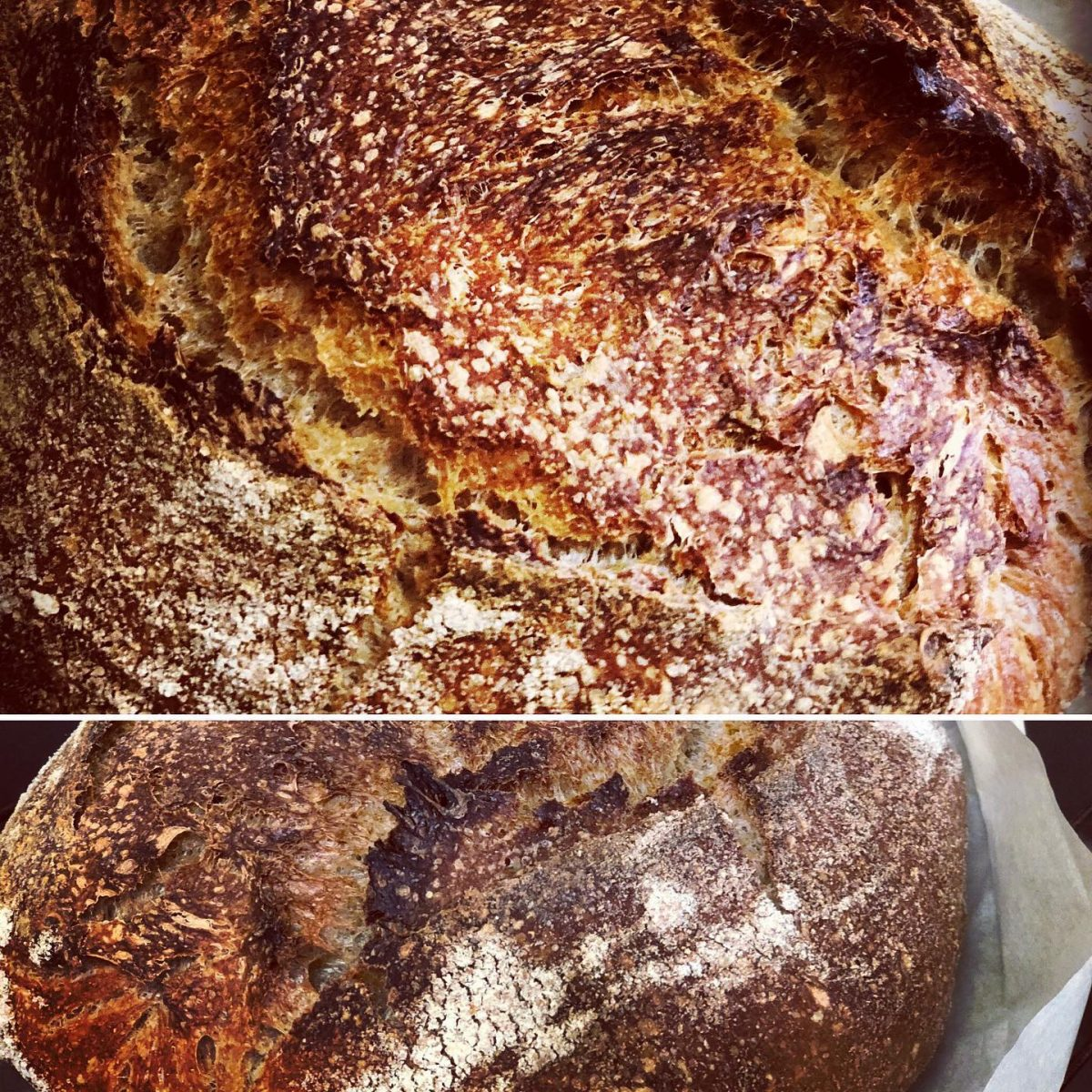 Busy Bee's Sourdough Bread Baking Guide